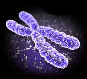 Chromosome Disorders